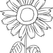 Small Picture Sunflower Amazing Coloring Page Sunflower Amazing Coloring Page