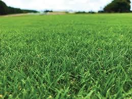 green grass field. Green Grass Field N