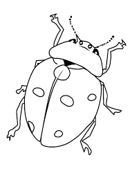 This free printable 'catch a bug' game is easy to put together and fun to play. Free Printable Bug Coloring Pages For Kids