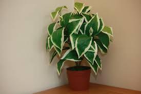 office indoor plants. Accessories. Large Indoor Plants Office C