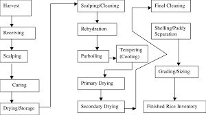 Rice Milling Flow Chart Wild Rice Processing Flow Chart Download Scientific Diagram