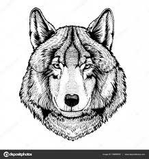 Vektor Divoký Vlk Pro Tetování Tričko Sportovní Logo Stock
