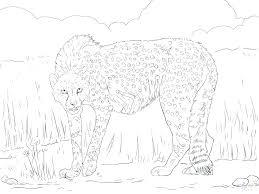 Ferrari Laferrari Colouring Pages Realistic Cheetah Coloring Likable