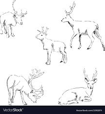 Deer Sketch Pencil Drawing By Hand