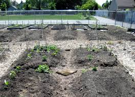 Planning A Kitchen Garden Sustainable Food For Thought March Food Group Planning Your