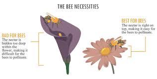 Increasing Your Gardens Bee Population Fix Com
