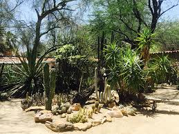 gardens in palm springs lorem ipsum dolor sit amet