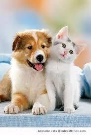 cute puppy and kitten best friends. Interesting Cute Friends Forever And Ever Intended Cute Puppy And Kitten Best U