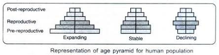 essay on human population definition growth growth models and  representation of age pyramid for human population