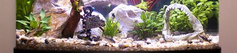 Image result for aquarium runs efficiently
