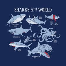 Shark Size Chart Sharks Of The World T Shirt Snorgtees