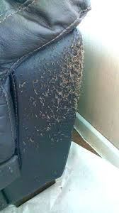 how to repair cat scratches on leather couch dog scratched fix sofa le