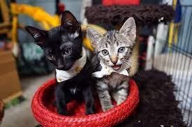 แมวน้อยดำ และสลิด จากชุมชนคลองเตย หาบ้านด่วน (เพิ่มรูป) - Pantip