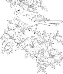 Free Printable Coloring Pagevirginia State Bird And Flower