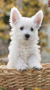 Cute Dogs HD Wallpapers for iPhone 7 ...