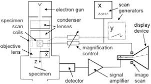 Scanning Electron Microscopy Lnf Wiki