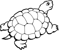 Small Picture Turtle Coloring Coloring Pages 22940 Bestofcoloringcom
