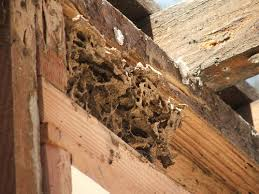 do you have a termite infestation