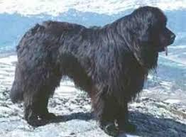 http://007beritaterkini.blogspot.com/2013/05/10-ras-anjing-peliharaan-terbesar-di.html