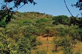 Природа растения и животные Южной Америки