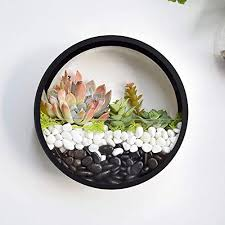 round hanging wall vase succulent