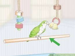 image led house a quaker parrot step 5