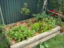 beginner vegetable garden. Fine Vegetable 40 Vegetable Gardening For Beginner Ideas Garden R