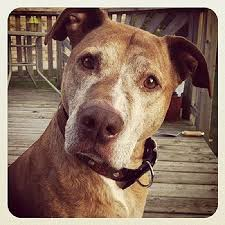 best dog essay ideas english help examples of  she loves dogs though she was once bitten by a mad dog essay she loves dogs though she was once bitten by a mad dog identify each sentences complex
