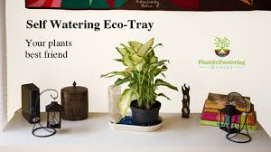 Self Watering Eco-Tray: Your plants best friend.