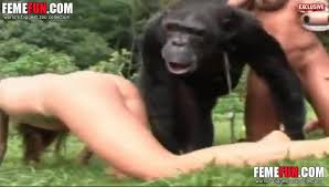 Chimpanzee creampies womans pussy
