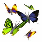 https://encrypted-tbn0.gstatic.com/images?q=tbn:ANd9GcTnFrwMiDbOZ-szI2lNjFsEc_F2jaSTKVi7TmU6rWLeEwwTTRoS