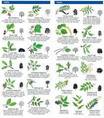 Fruit Tree Identification Chart Michael Coluccio Colucciomichael2 On Pinterest