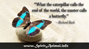 Butterfly Quotes Mesmerizing Butterfly Quotes