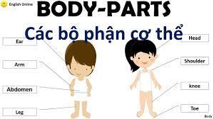 Từ vựng Tiếng Anh các bộ phận trên cơ thể/Body-Parts/English Online  (P1-New) - YouTube