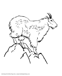 Small Picture Wild Animal Coloring Pages Mountain Goat Coloring Page and Kids