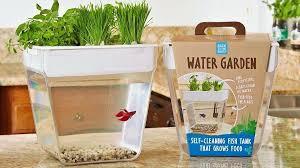 window sill garden mini water garden windowsill herb garden kit home depot