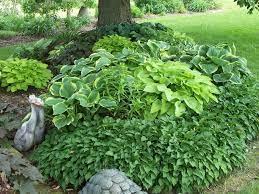design ideas for hosta gardens