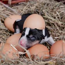 a puppy with eggss