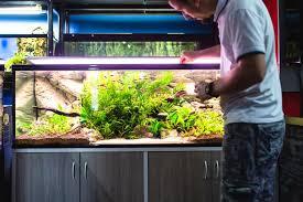 home aquarium for 2021 our reviews