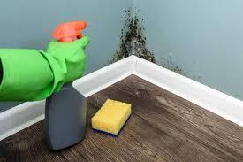 does bleach kill mold 3 alternatives