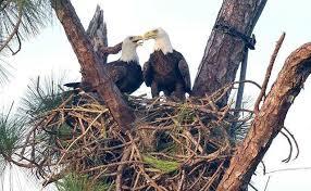 pritchett eagle cam. Simple Eagle Photo Dick Pritchett Real Estate On Eagle Cam M