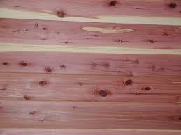 cedar wood wallpaper