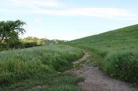 tall green grass field. Dirt Path Through Tall Grass On Hill Green Field