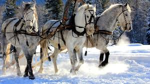 winter animal nature backgrounds. Beautiful Nature Free Horror Nature Mobile Wallpaper Trees Snow Big Screenanimals  Winter Pictures Colourful Rustic Horses_1920x1080 Wallpaper HD On Winter Animal Nature Backgrounds