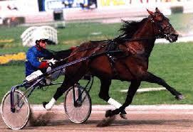 """Résultat de recherche d'images pour """"gif animé cheval de course"""""""