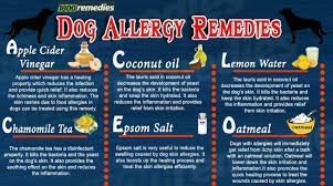 The home remedies for dog allergies consist of some natural remedies ...