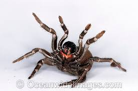 Image result for mouse spiders