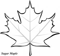 Small Picture Maple Leaf Printable Coloring Pages kanadian leave Pinterest