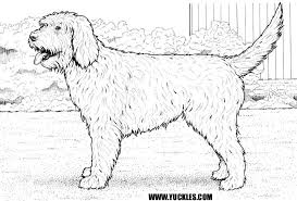 Small Picture Labradoodle Coloring Page by YUCKLES