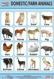 Animal And Their Babies Chart In Rithala Delhi Baby